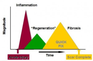 normal injury response cascade