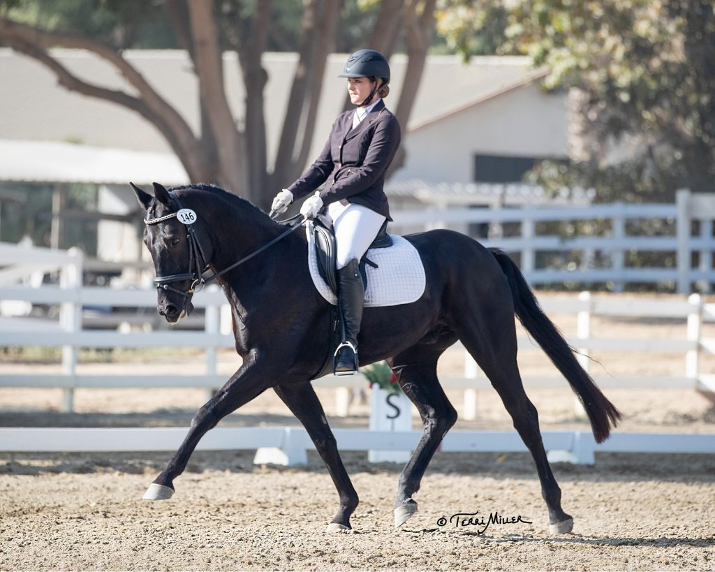 A black horse with rider at dressage competition after receiving VetStem Cell Therapy for Equine Cervical Facet Disease