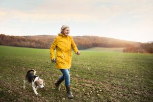 And older woman walking a beagle dog on a leash in a grassy pasture